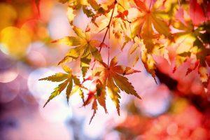 feng-shui-autumn-meditation